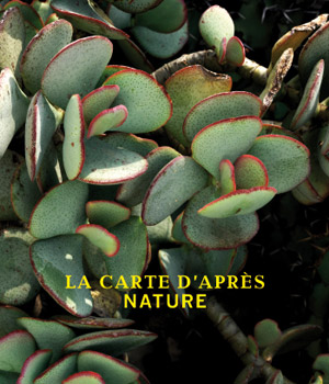 Opening exhibition of Villa Paloma: La carte d'apres Nature