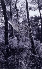 Angels Ribe 1969-84