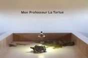 "Shimabuku, ""My teacher Tortoise,"" 2011. Courtesy of the artist; Centre international d'art et du paysage de l'île de Vassivière; Air de Paris, Paris; Wilkinson Gallery, Londres.Photo by Aurélien Mole"