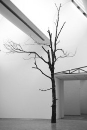 Zoe Leonard, Tree, 1997/2011.Museum Ludwig, Cologne. Photo by Nico Weber.