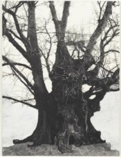 "Patrick Van Caeckenbergh, ""Drawings of Old Trees (summer 2010),"" 2010. 26,8 x 20,2 cm."