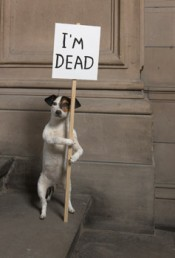 "David Shrigley, ""I'm Dead,"" 2010.© The artist and courtesy of the artist Collection Hamilton Corporate finance Limited. Image Courtesy of Glasgow International Festival. Photograph by Ruth Clark."