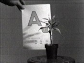 John Baldessari, &quot;Teaching a Plant the Alphabet,&quot; 1972. Film still. Courtesy Electronic Arts Intermix (EAI), New York.