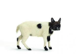 Thomas Grnfeld, &quot;misfit (lamb/bulldog),&quot; 2011. Taxidermy, 50  70  35 cm. Courtesy Massimo de Carlo, Milano / London.  VG Bild-Kunst, Bonn 2013. Photo: Lothar Schnepf, Cologne.