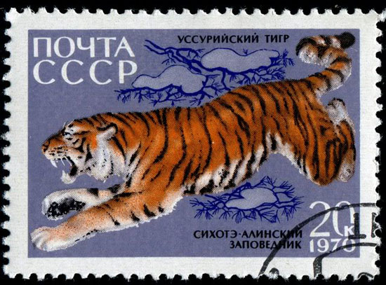 the privatization of the tiger leaping Download 523 leaping tiger stock photos for free or amazingly low rates new users enjoy 60% off 81,498,017 stock photos online.