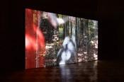 Helen Sear, Company of Trees, 2015. Video. © Helen Sear.
