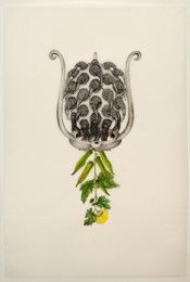 Joscelyn Gardner, Hibiscus esculentus (Sibyl), 2009. Hand-colored stone lithograph on frosted mylar, 36 x 24 inches.