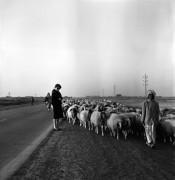 Latif al Ani, Lady in Eastern Desert, 1961.Black-and-whitedigital print on Hahnemühle Baryta Fine Art paper, 25 x 25 cm.Courtesy the artist, the Arab Image Foundation and Ruya Foundation.